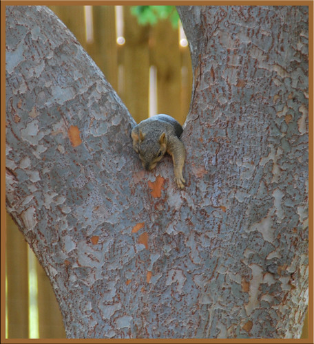 Sleepy-Squirrel_2