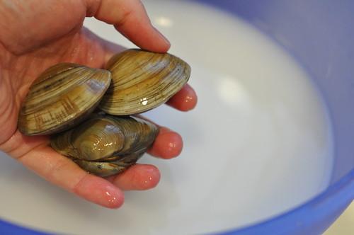washing clams