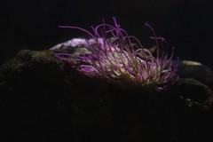 Waterworld IV (dididumm) Tags: pink plant strange yellow underwater purple pflanze lila gelb mysterious tentacles violett waterworld unterwasser seltsam yogsothoth mysteris tentakel