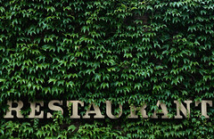 Restaurant (Crazy Ivory) Tags: street city plant green nature public canon t restaurant belgium eating letters natur brugge n ivy s r e u bruges growing tamron leafs grown efeu brgge tamron18200 40d canoneos40d gettygermanyq2 gettygermanyq3 gettygermanyq4