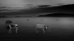 Formby moss in mist (frazerweb) Tags: