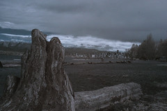 IMG_9568_c_C (srchaput) Tags: trees ir infrared