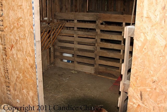 How high to make walls in goat's stall??? - Barnyard Bananza