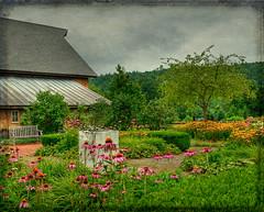 """In the corner of his garden..."" (Merilee Phillips Offline) Tags: flowers flower barn garden nikon vermont ie legacy tqm guilford flowergarden flypaper d700 tatot magicunicornverybest sbfmasterpiece heavensshots sbfgrandmaster"