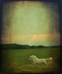 Longrider (Opal in the rough) Tags: sunset horse motion texture field clouds running layer thelittledoglaughed abbea