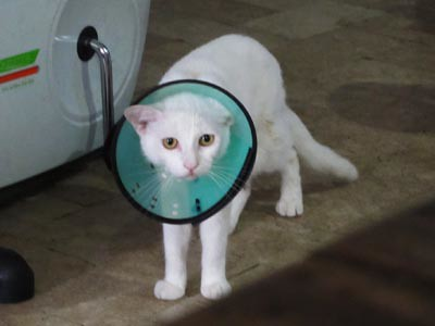 sad white kitty