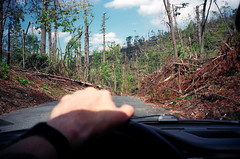 (Levi Mandel (sea kay)) Tags: trees film car forest 35mm aftermath driving pov connecticut scan gothamist tornado