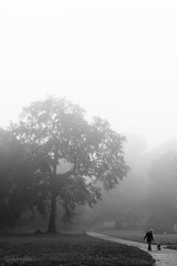 foggy morning (lichtmenge) Tags: park morning trees bw white mist black tree fog germany deutschland nebel sw weiss bume morgen baum schwarz greifswald mecklenburgvorpommern