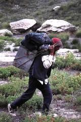 1999. agosto kedar dome, india (12) (samuele striatto) Tags: india dome himalaya scialpinismo kedar gangotri shivling garwal