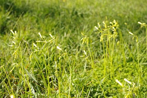 wildflower2