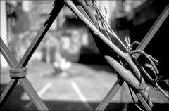 (manni39) Tags: vintage bokeh 28mm el vintagecamera nikkor nikkormat wideopen luckyfilm primelens nikkor28mm35 festbrennweite nikkormatel offenblende