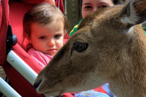 Amélie & Deer