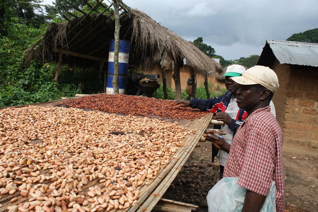 Séchage du cacao Togo