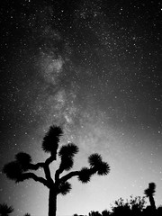 Joshua Tree Milky Way (defiantGTI) Tags: park tree way joshua national milky