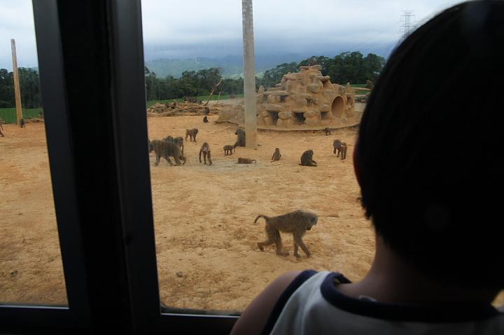 六福村動物園034