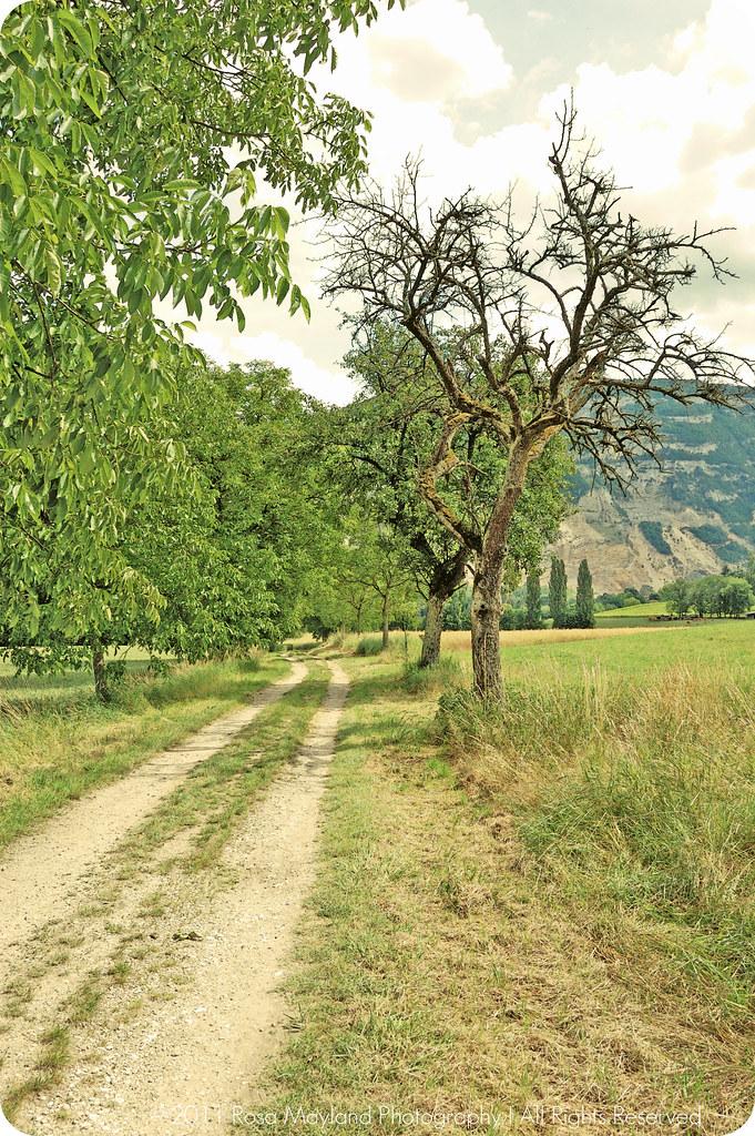MLLA Path 1 bis
