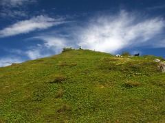 Mountain Top in Sitka, AK (Tatchum) Tags: dog alaska hiking ak hike line juneau ridge hiker sitka southeastalaska harbormountain alaskaferry