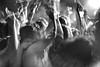 @ worldwidefestival 2011 (Winfried Veil) Tags: leica light party people blackandwhite bw motion france beach monochrome strand 50mm dance concert movement hands frankreich ray arms action crowd rangefinder move menschen beam sweat bewegung sw dancefloor konzert summilux asph excess hände menge m9 sète gillespeterson masse arme 2011 exzess tanzfläche schwarzweis lichtstrahl schweis messsucher worldwidefestival mobilew leicam9 winfriedveil