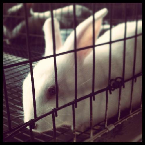 Cutie bunny @ the youth fair