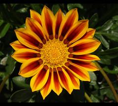 Vibrant (btn1131 theromanroad.org) Tags: flowers plants nature floral pen olympus zuiko clevelandzoo 1442mm epl1 mygearandme