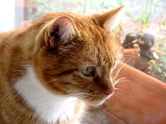 True friend (Andylinchen) Tags: red home animal cat canon friend natur taco canonpowershotg10 mygearandme ringexcellence