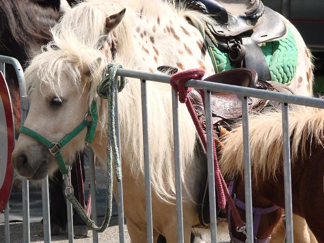 Ponies!