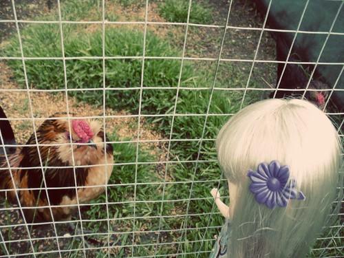 cluck?