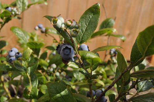 Garden July 2011 009