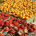 Tomatero Organic Farms
