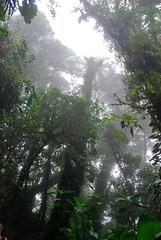 Cloud Forest (Brian Sloane) Tags: tree bird rainforest costarica monteverde cloudforest monteverdecloudforest