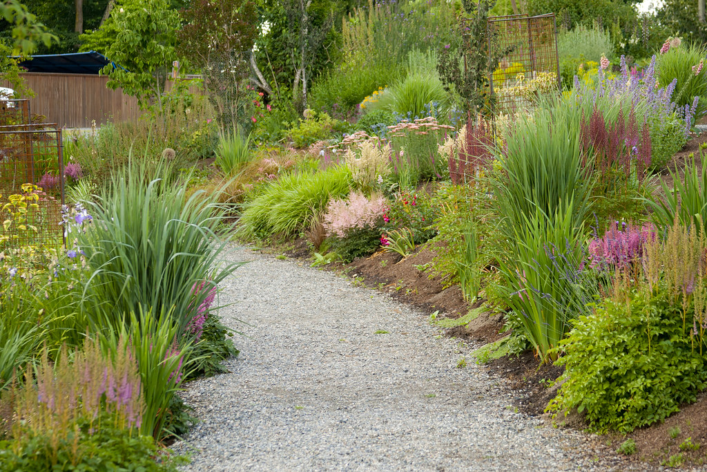 Path with Panicum