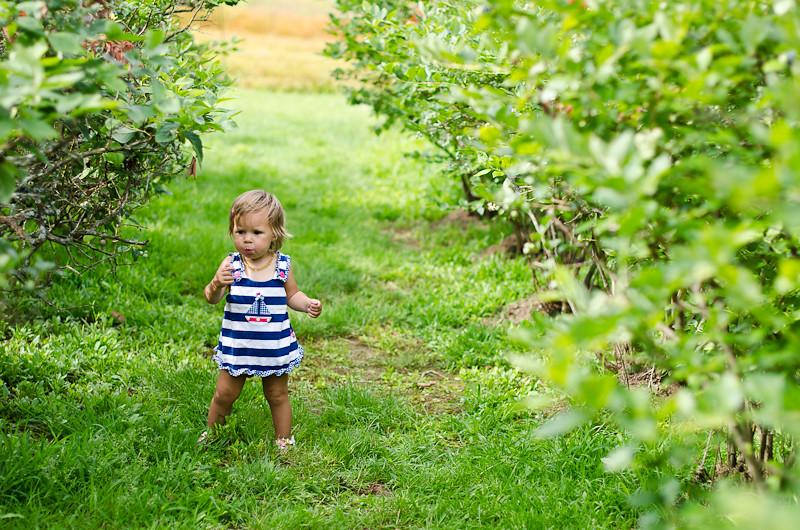 Blueberry Picking Pt 14