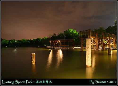 水中的突木樁