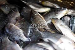 60DBD2_0659 (bandashing) Tags: england food fish manchester basket scales tropical fin tilapia sylhet freshwater cichlid bngladesh bandashing