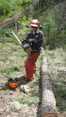 IMG_1817 (scrumtrulescent) Tags: camping mist fire colorado hiking chainsaw trail spike nalgene stihl rampartrange ponderosapine pikenationalforest beetlekill s212