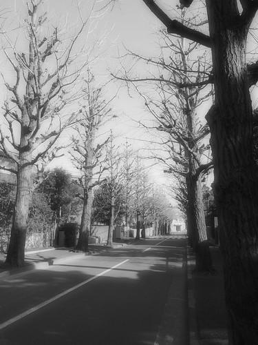 田園調布 枯れ木並木
