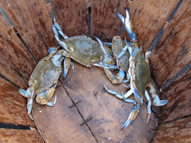 Crabbing et al 019
