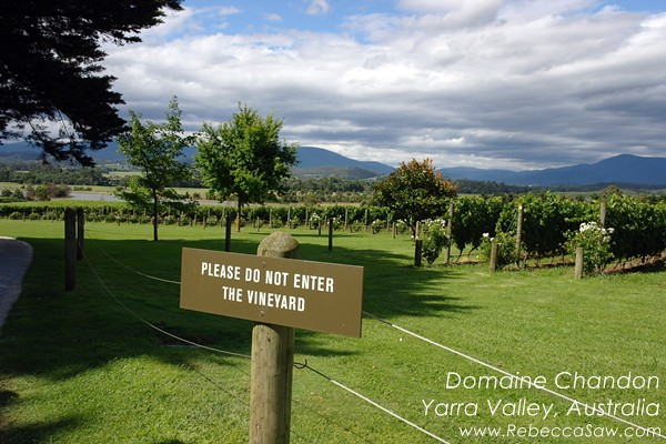 domaine chandon yarra valley australia (02)