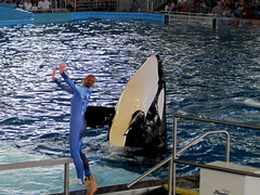 IMG_4944 (dolphingirl0609) Tags: world sea camp san texas dolphin lion seal killer whale orca beluga antonio advanced career