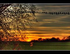 Sunset (Vijay_ktyely) Tags: sunset sky cloud sun tree bird nature colors grass birds silhouette clouds composition capture hue