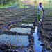 Mundukide en Mozambique