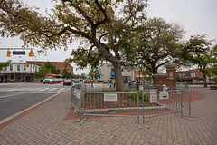 toomer's corner - auburn, alabama (flee the cities) Tags: trees alabama auburn intersection oaks streetcorner dying collegeave poisoned liveoaks auburnuniversity toomerscorner magnoliaavenue toomersoaks