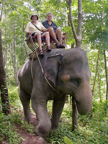 Comfortable ride on elephant in Phuket