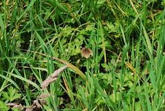 Marbury, Cheshire 260711 DSC_0268 (Leslie Platt) Tags: cheshire cropped marbury bigmere cheshireeast