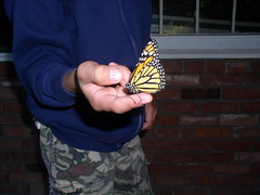 with a butterfly