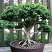 dawes_arboretum_20110625_17285