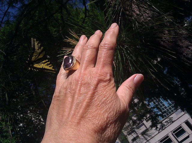 View looking upward, a woman's hand with a large amethyst ring and a monarch butterfly against the backdrop of a ponderosa pine