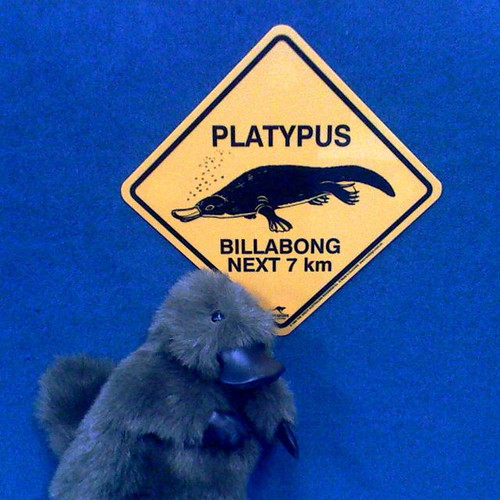 Platypus crossing (#28)
