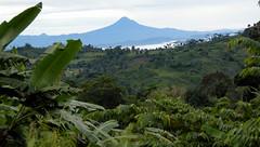 Near lake Sebu South Cotobato (Bram Demeulemeester - Birdguiding Philippines) Tags: philippines forests mindanao plantations deforestation lakesebu bramdemeulemeester sitiosiete birdguidingphilippines birdingtoursphilippines