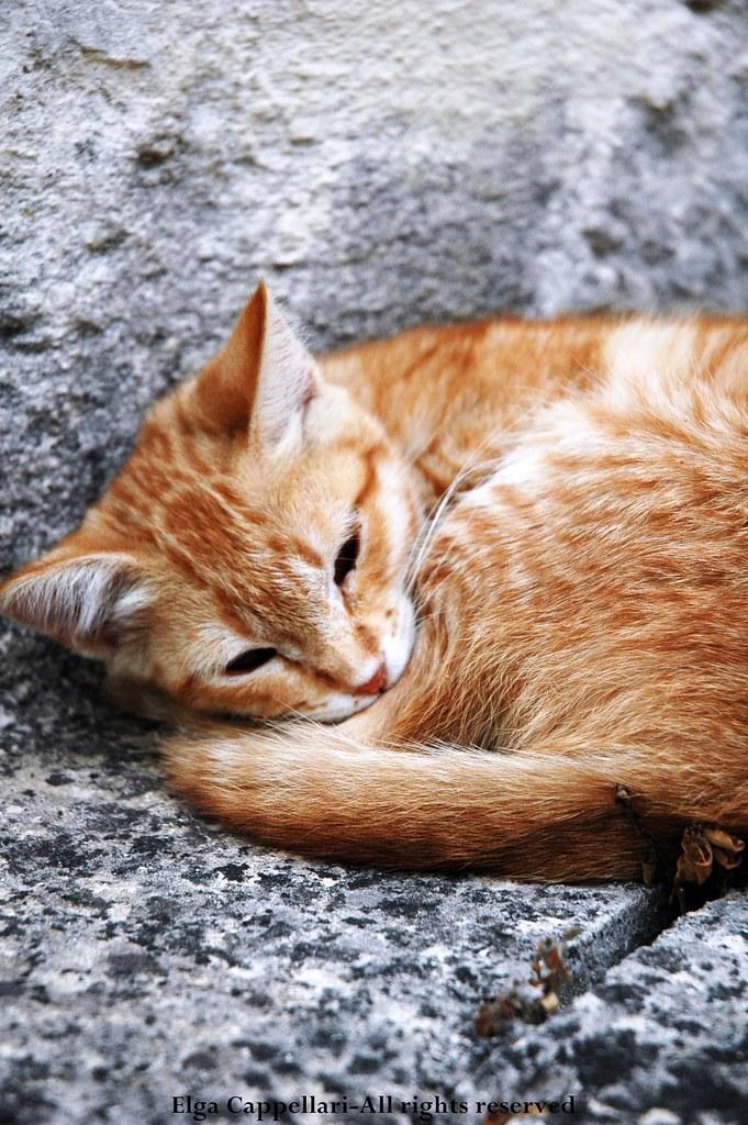 gatto Matera